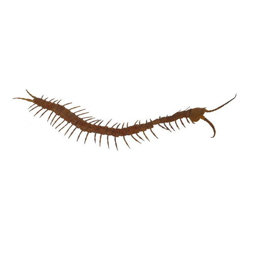 Centipedes Outdoor Garden Sculpture