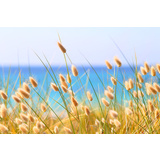 Bunny Tail Grass Beach Canvas Wall Art