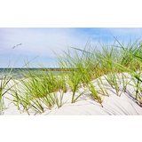 Coastal Seagrass Canvas Wall Art Print