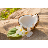 Coconut Frangipani Canvas Wall Art Print