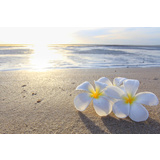 Beach Frangipani Canvas Wall Art Print