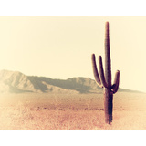 Cactus Dirt Canvas Wall Art Print