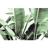 Banana Palm Canvas Wall Art Print