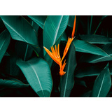 Tropical Heliconia II Canvas Wall Art Print