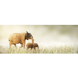 Elephant Grass Field Canvas Print Wall Art