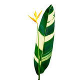 Yellow Heliconia Flower Canvas Print Wall Art