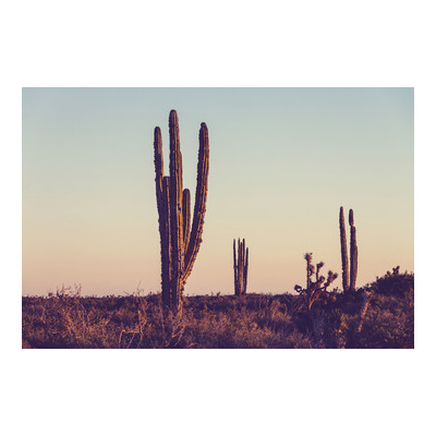 Cactus Desert Canvas Wall Art Print